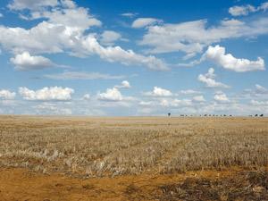 Agricultura hoy, como afecta la sequia en el campo
