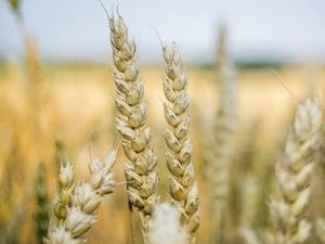Beneficios de la agricultura en la nutricion