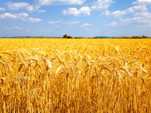Como Garantizar Seguridad en la Agricultura