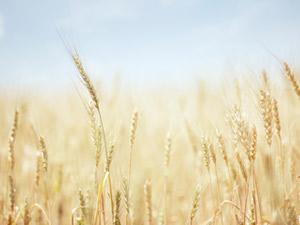 La Agricultura como Motor de Desarrollo