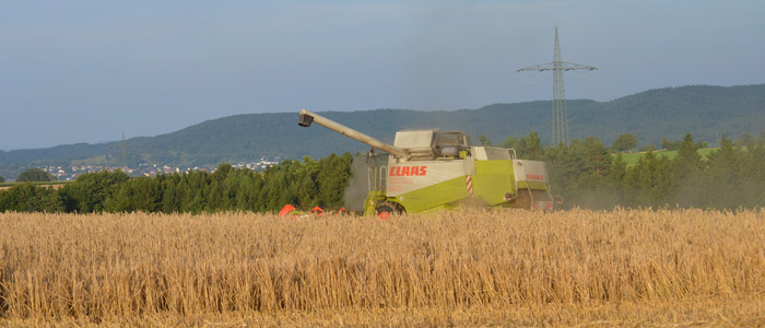 Como Sabe Agricultor Cereal Listo Recogida