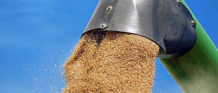 Que hacer con cereal después cosecha