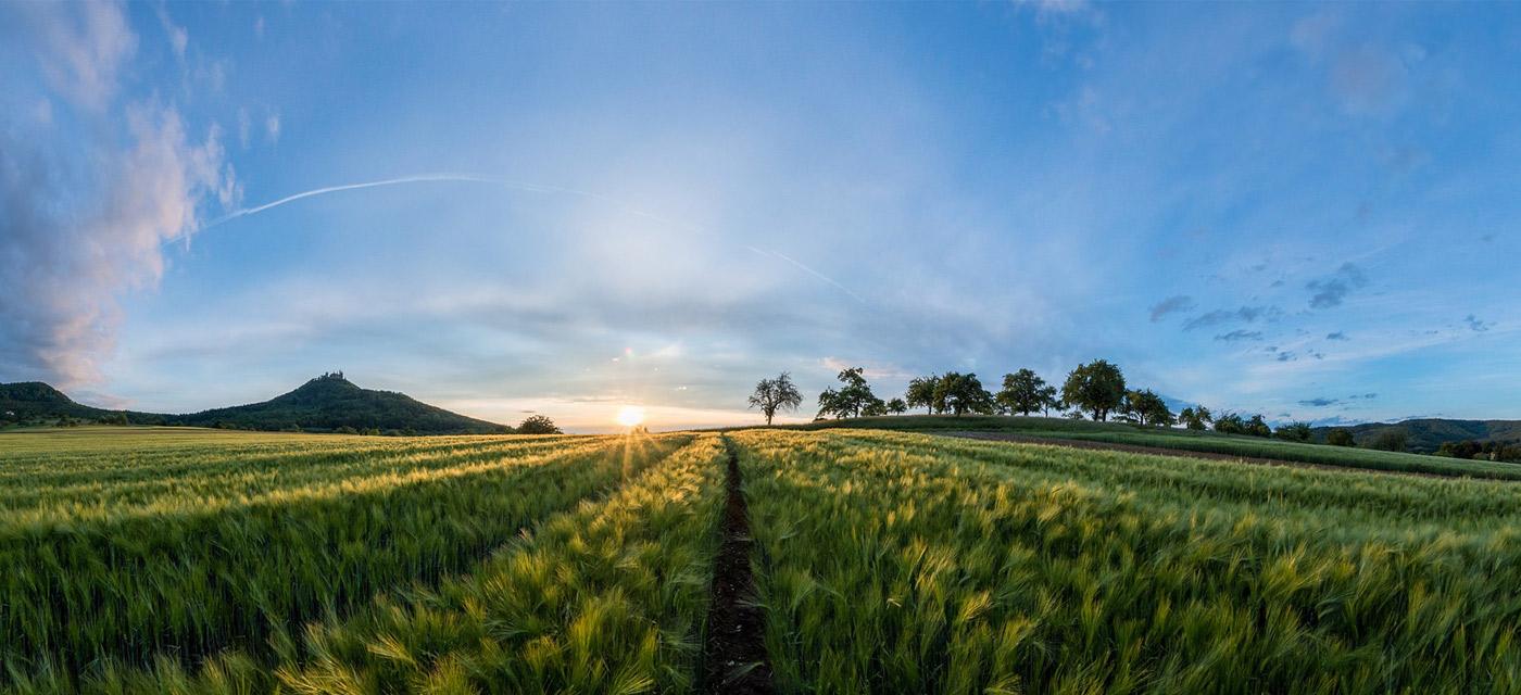 A que se dedica agricultor desde sementera a recogida grano