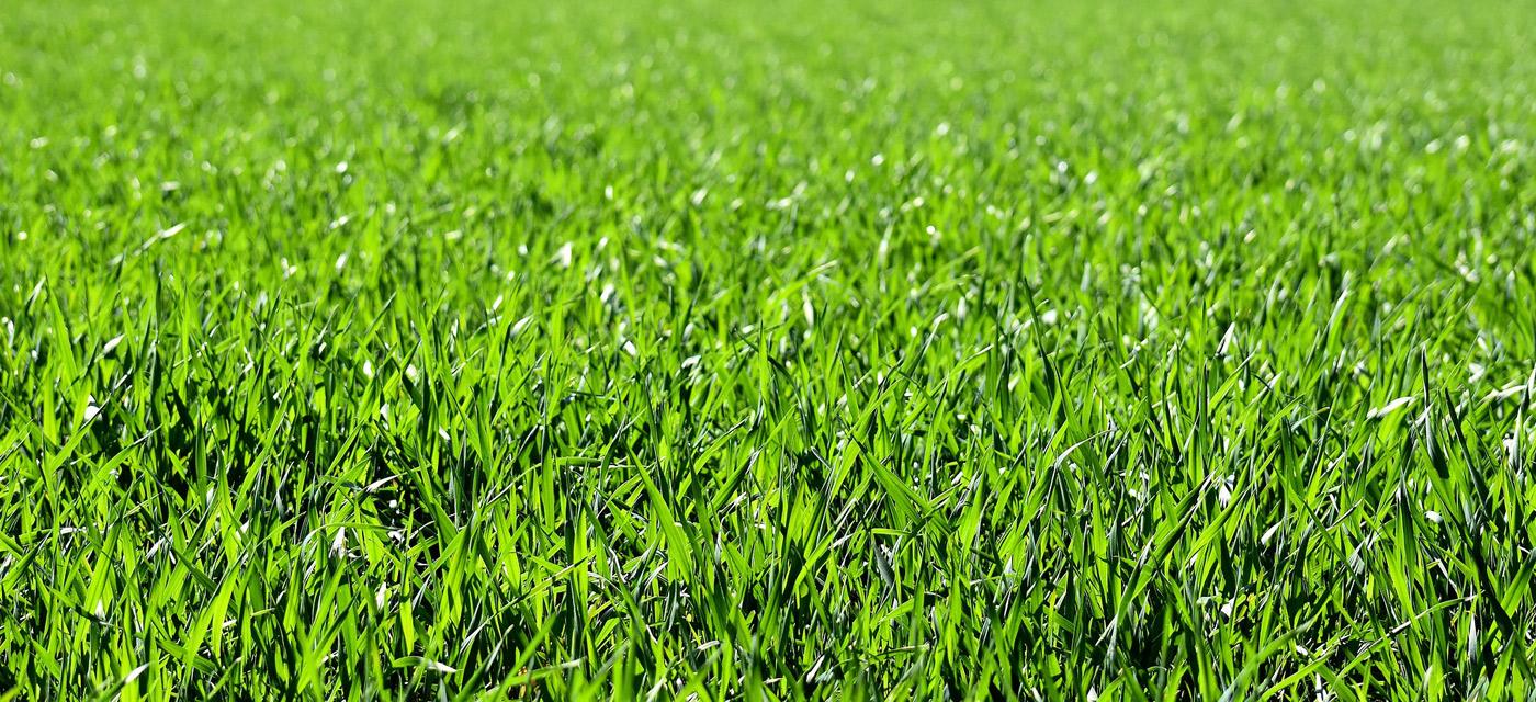 Cuando es el mejor momento para echar herbicida en el campo
