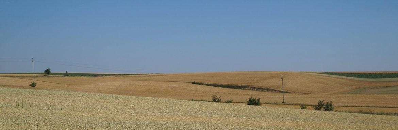 Castilla Leon más secano que regadío