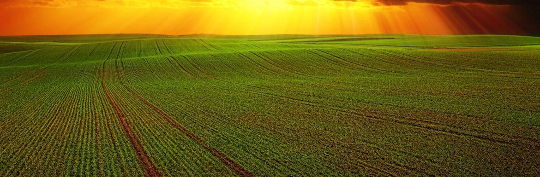 El campo pide agua, ¿todavía se puede salvar la cosecha de este año?