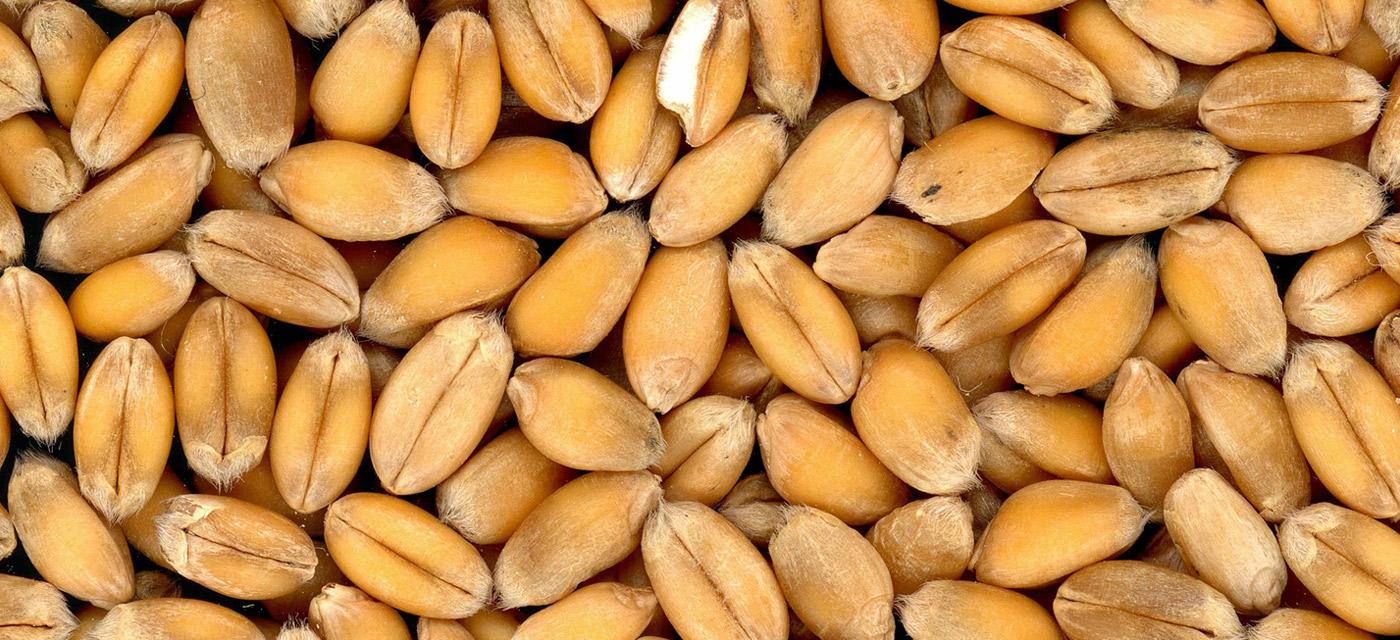 Que supone el trigo para nuestro pais