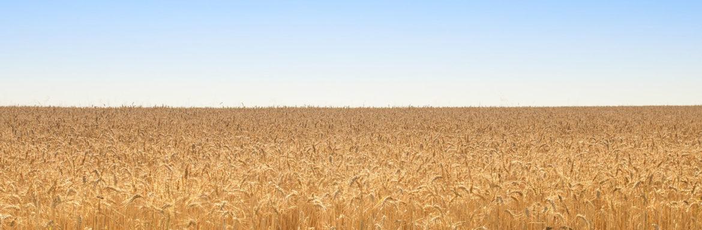 Productividad Sector Agroalimentario, Método Lean