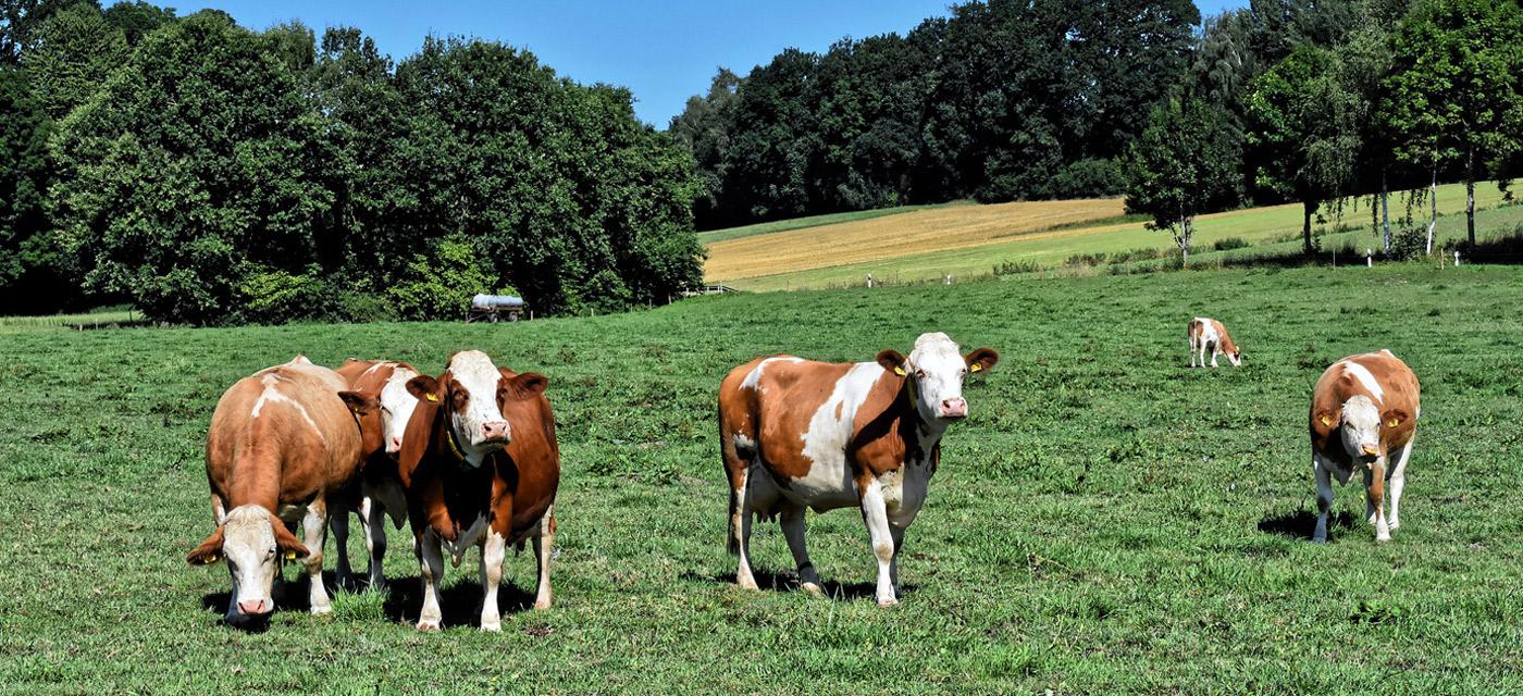 Características agricultura y ganaderia en Castilla y León