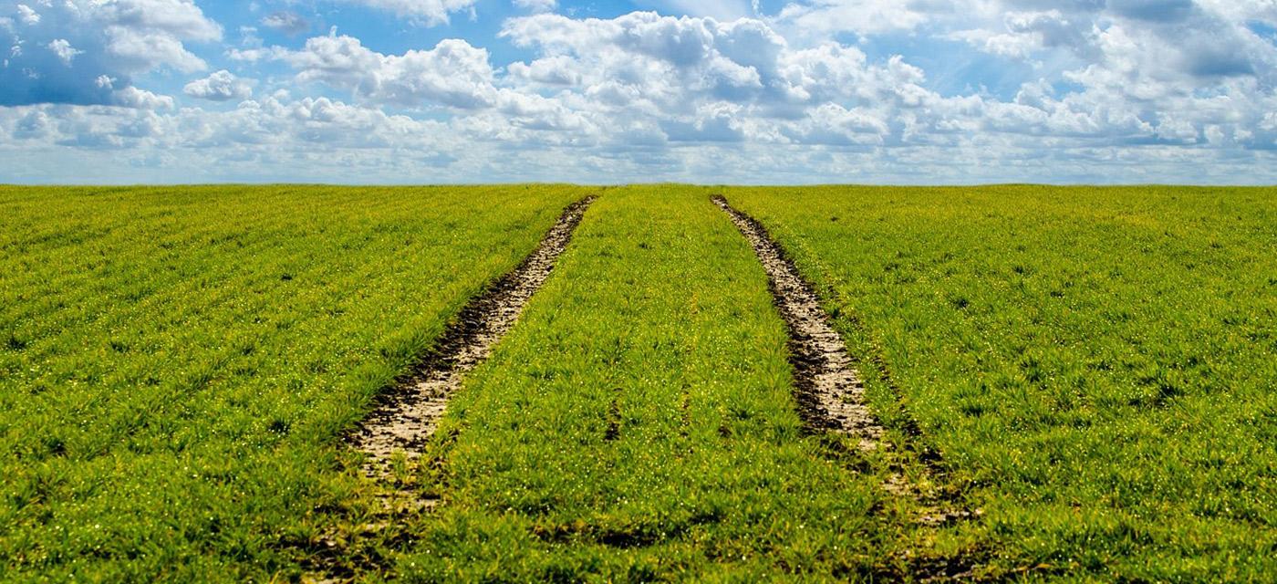 Agricultura Ecológica o Agricultura Sostenible