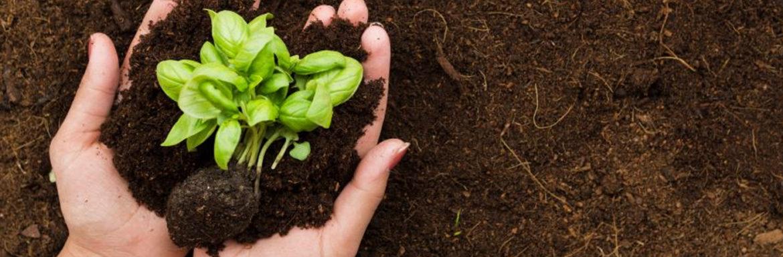 Cultivo Sostenible Legumbres