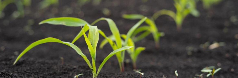 Situación agricultura ecológica